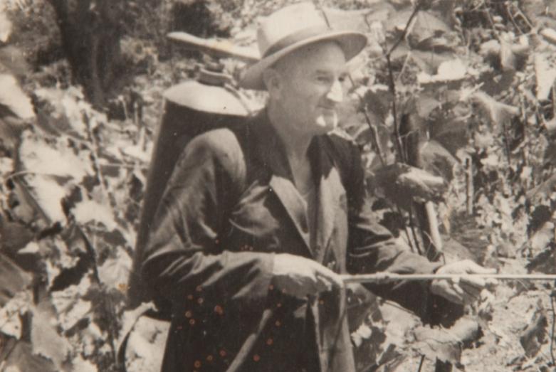 قسطنطين شاكريل أثناء معالجة الكرمة في الحديقة، ليخني، في اعوام الستينات