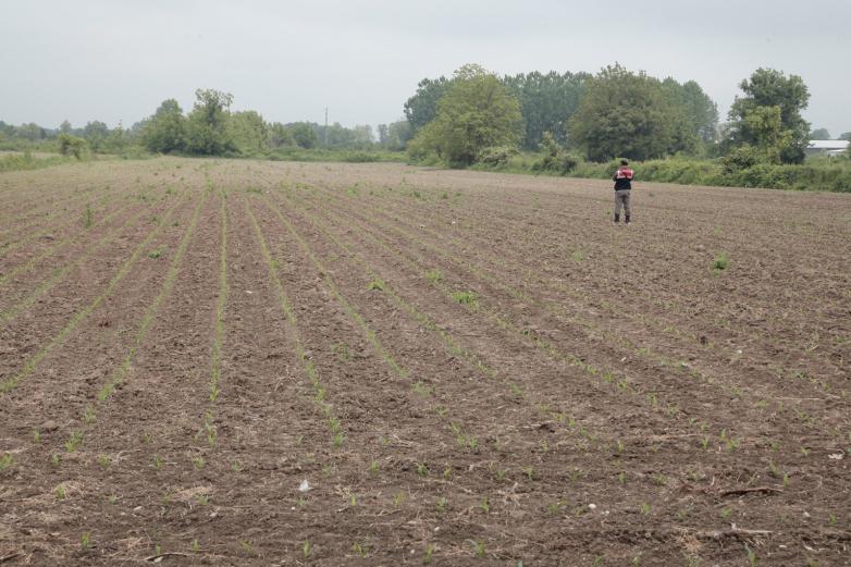 Посевы кукурузы в селе Балбалы, Турция