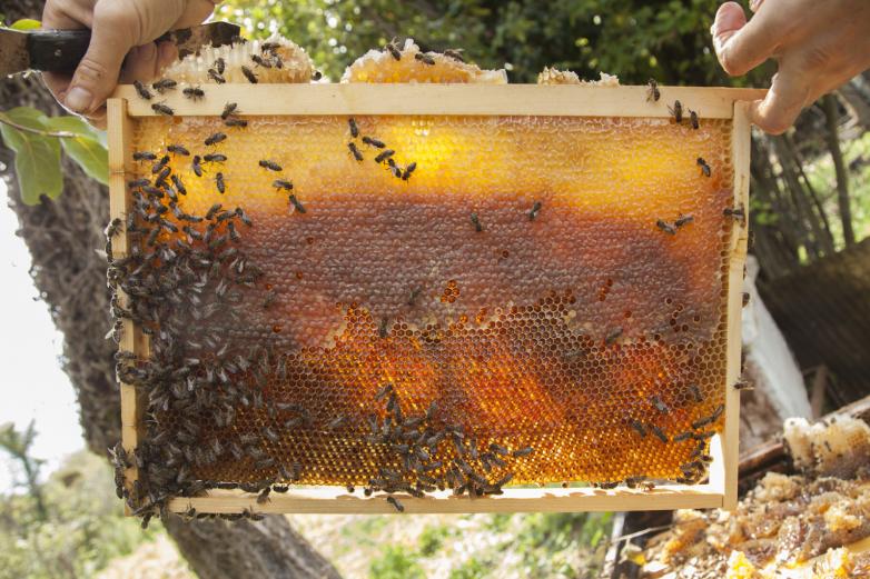 Пчеловодство на Кавказе