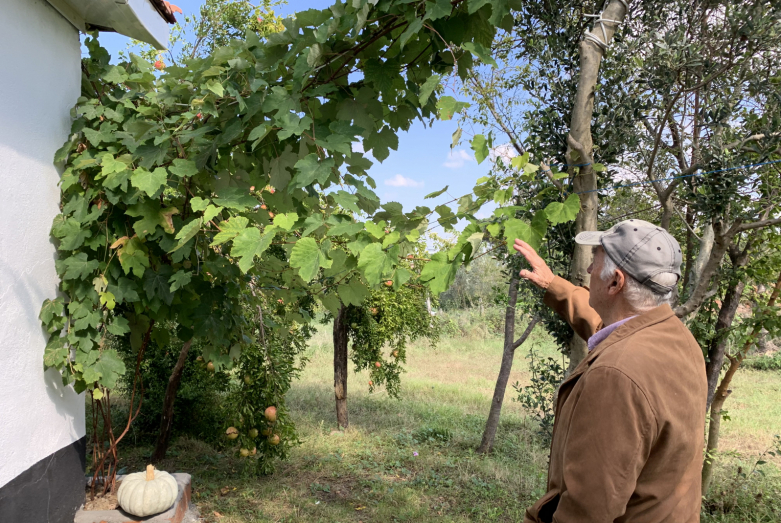 Zeki Esench talks about the vine brought by his ancestors from the Caucasus to Turkey