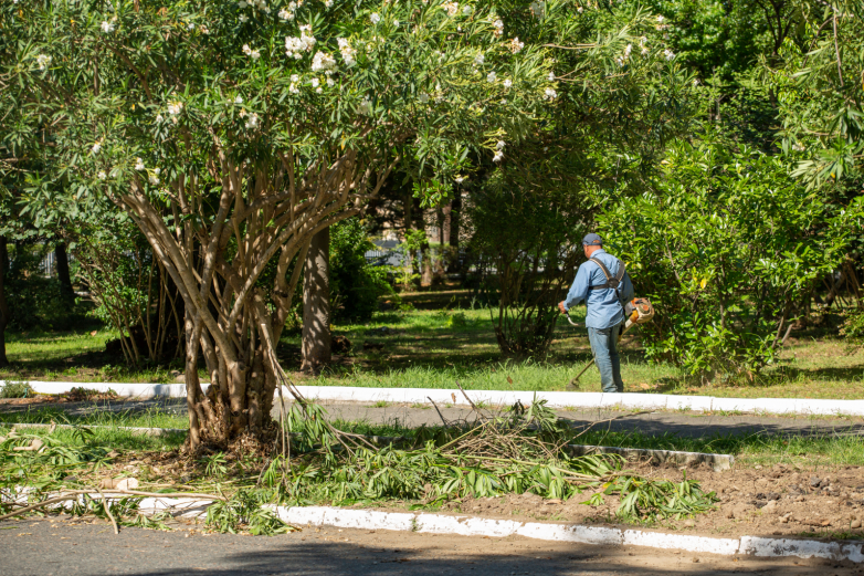 Pruning in the Sukhum Park, 2020